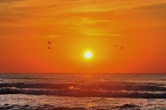 Seagulls in the sunrise at the Black See Stock Photos