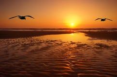 Seagulls and sunset Stock Photos