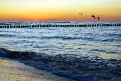 Seagulls sunset Royalty Free Stock Image