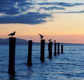 Seagulls at sunset Royalty Free Stock Photos