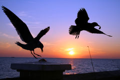 Seagulls at Sunset Royalty Free Stock Photos