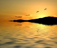 Seagulls at Sunset. Flying Over Water Royalty Free Stock Images