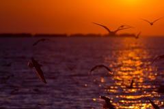 Seagulls at the sunset Stock Photos