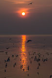 Seagulls on sunset. At bangpu, thailand Royalty Free Stock Photos