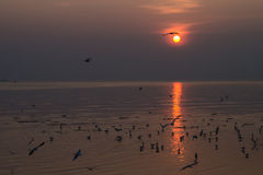 Seagulls with sunset. At bangpu, thailand Royalty Free Stock Photos