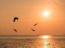 Seagulls in sunset Royalty Free Stock Photography
