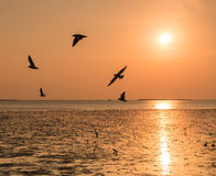 Seagulls in sunset Stock Images