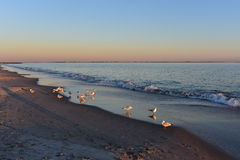 Seagulls and Sunset on Coney Island Beach Royalty Free Stock Photography