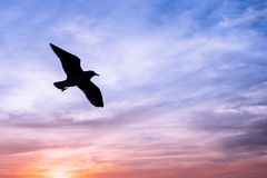 Seagulls in sunset Stock Photography