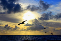 Seagulls at sunset. Seagulls flying in the sky taken at sunset Royalty Free Stock Photography