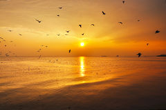 Seagulls and sunset Stock Photography