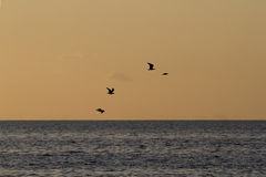 Seagulls at sunset Stock Photography