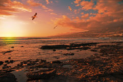 Beautiful ocean and sky at sunset. Seagulls in the sunset sky Stock Images