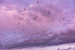 Seagulls at sunset Stock Photos