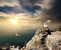 Seagulls and sunset Royalty Free Stock Photo
