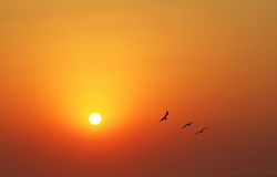 Seagulls at sunset. Three seagulls at sunset by the sea shore Royalty Free Stock Images