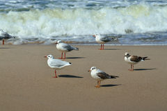 Seagulls and surf Royalty Free Stock Photography