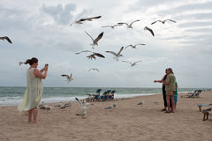 Seagulls Swarm Around Family Taking Photo On Beach Royalty Free Stock Photography