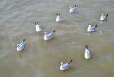 Seagulls swim in the sea Stock Photo
