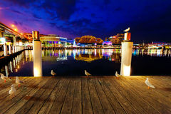 Seagulls in Sydney harbour at night with reflections of the city Royalty Free Stock Image
