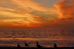 Seagulls Sylwetkowi przy zmierzchem przy Torrance stanu plażą, Los Angeles okręg administracyjny, Kalifornia obraz royalty free