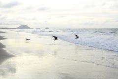 seagulls tre Fotografering för Bildbyråer