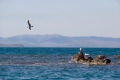 seagulls tre royaltyfri bild