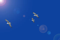 Seagulls trio Stock Image
