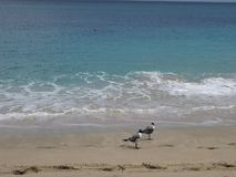 Seagulls on a tropical beach stock video footage