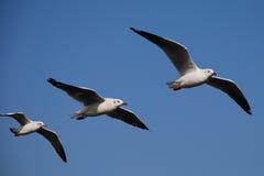 seagulls trzy Obraz Stock
