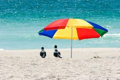 Seagulls Under Beach Umbrella royalty free stock photos