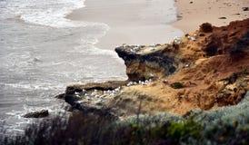 Seagulls vaggar på på kustlinjen Royaltyfri Bild