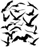 Seagulls vector Stock Photography