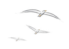 Seagulls (vector) Royalty Free Stock Photography