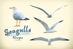 Seagulls vector icons Royalty Free Stock Photography