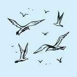 Seagulls vector sketch drawing by hand Royalty Free Stock Photos