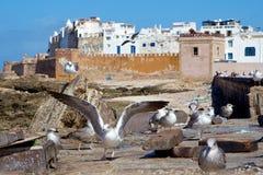 Seagulls vid de gamla väggarna av Medina av Essaouira, Marocko Royaltyfri Foto