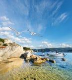 Seagulls vid kusten i Sithonia, Grekland Royaltyfria Foton