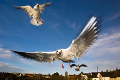 Seagulls View Stock Photography