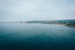 Seagulls and view of the Pacific Ocean in La Jolla, California. Stock Images