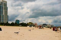 Seagulls vilar på sanden av Miami Beach under molnig sommardag Arkivfoto