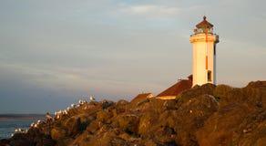 Seagulls vilar Shorebirds vaggar barriärpunkt Wilson Lighthouse Arkivbild