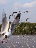 Seagulls w Bangpoo Tajlandia Zdjęcie Stock
