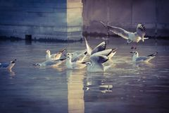 Seagulls w fontannie fotografia stock