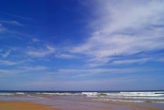 Seagulls w lata niebie zdjęcie stock