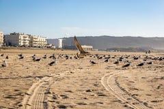 Seagulls w piasku przy Nazare plażą zdjęcie stock