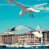 Seagulls w porcie Marseille, Francja, filtrujący Fotografia Royalty Free