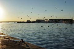 Seagulls w porcie Santa Pole, Alicante Hiszpania zdjęcia stock