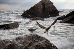 Seagulls waiting for the waves. royalty free stock photo