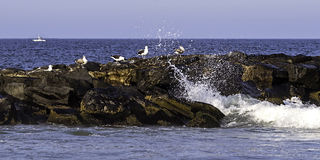 Seagulls watch as wave breaks over their jetty on Jersey shore Royalty Free Stock Images